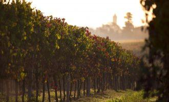 Zola Predosa città del vino