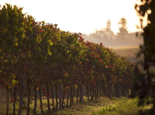 Bologna hills wine tour