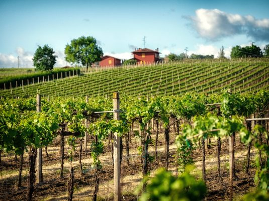 en/the-wines-of-bolognese-hills/
