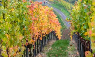 Modena Wines tour around Vineyards, Hills and Medieval Castles