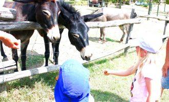 Kid-friendly Family Tour at Educational Farm in Modena